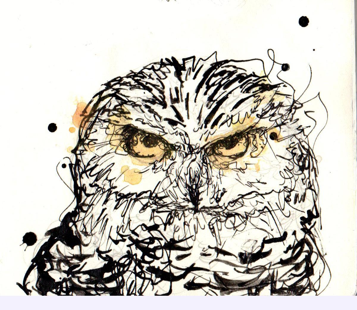 owl093.jpg