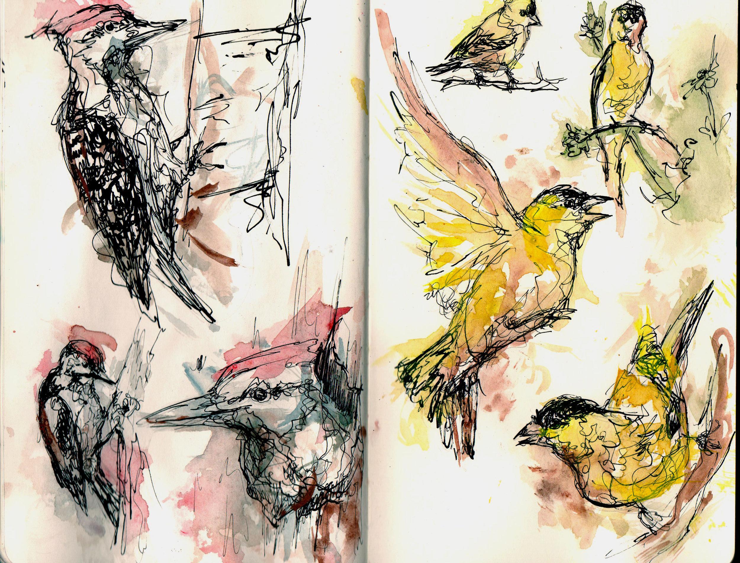 woodpecker089.jpg