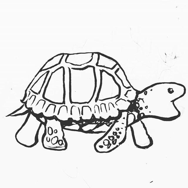 Inktober day 24 . . . . . . #inktober #art #drawing #turtle #cute #cuteanimals #ink #pen #brushpen #illustration #turtoise #ink #nom #delightfulart #lines