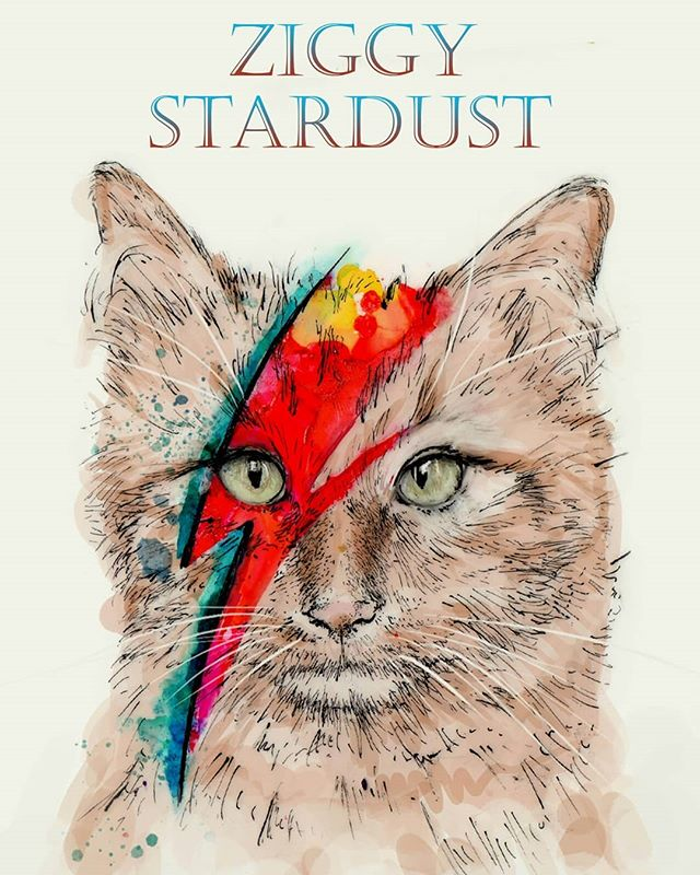 Been a while since I posted anything, so I present to you Ziggy Stardust featuring Ziggy the cat! A fun poster I made for a friend who's a big David Bowie fan! Isn't he a cute cat?? . . . . . #ziggy #ziggystardust #davidbowie #drawing #illustration #cat #art #sketch #sketchbook #aladdinsane #ink #quillpen #traditional #digitalart #digitalpainting #fur #funny #albumart #greeneyes #ginger #orange #lightning #watercolor #yuppo #cutecat #drawing #meow