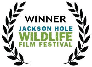 Jackson Hole Wildlife Film Festival