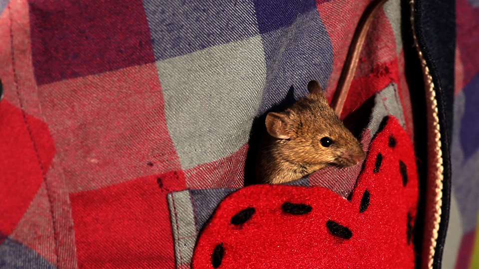Mouse in the scarecrow's pocket