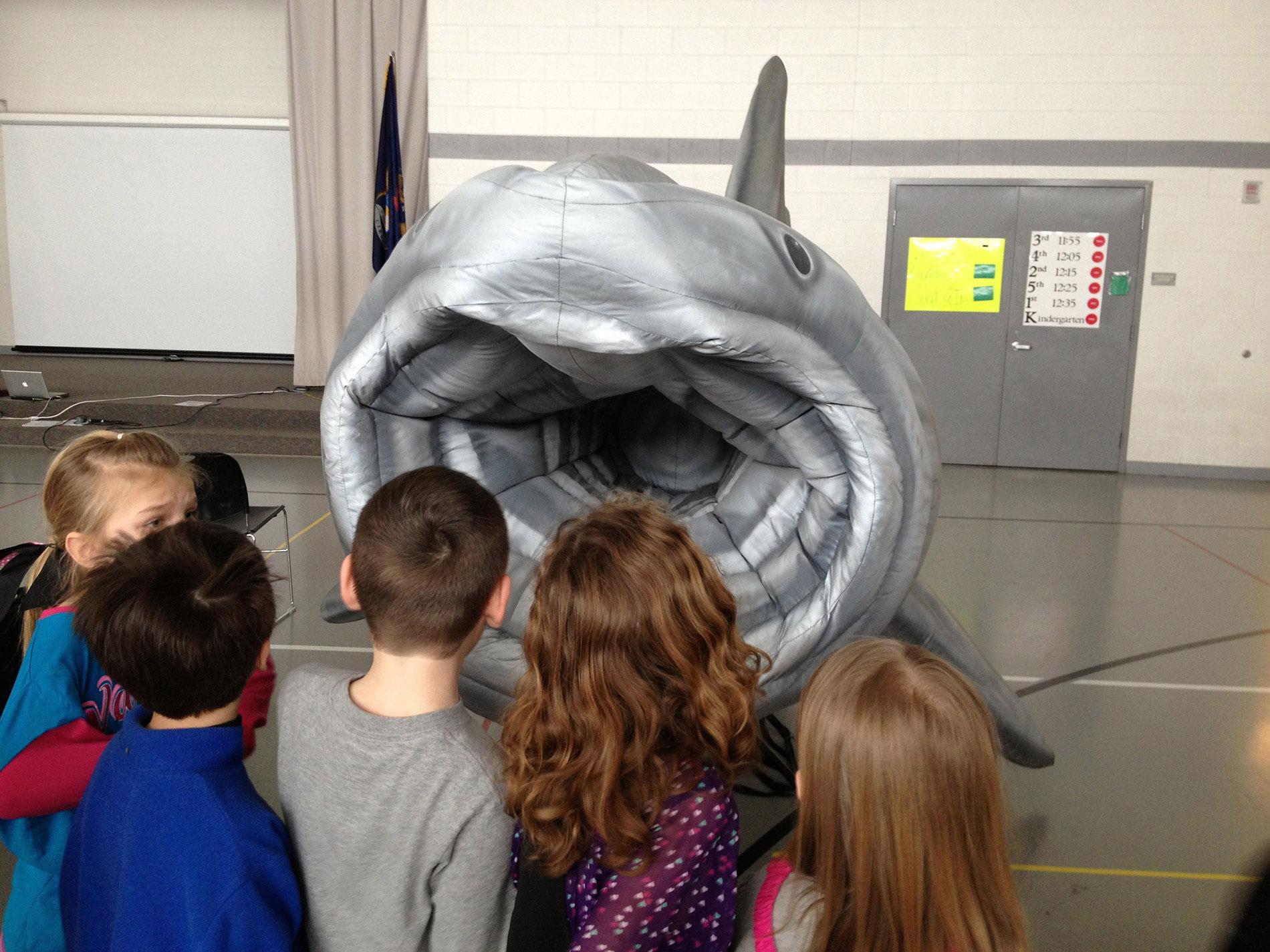Basking Shark Mouth