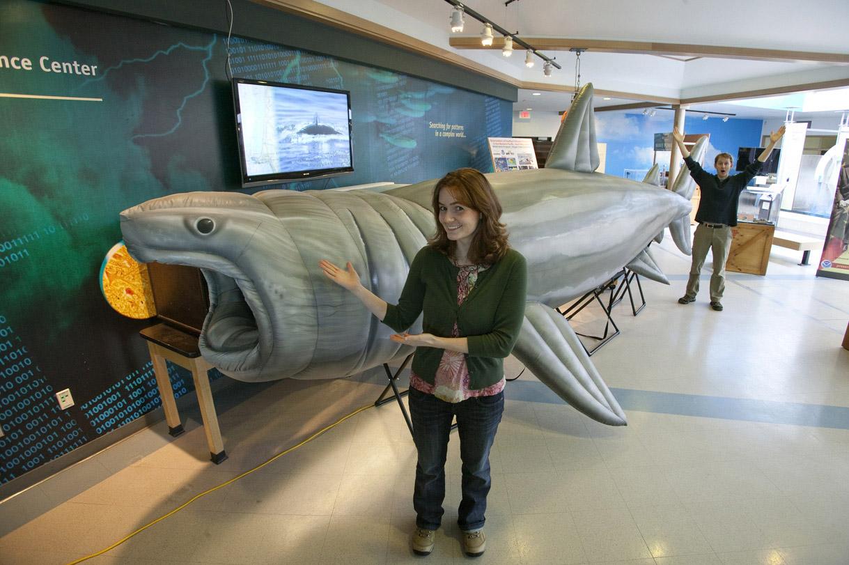 Inflatable Basking Shark