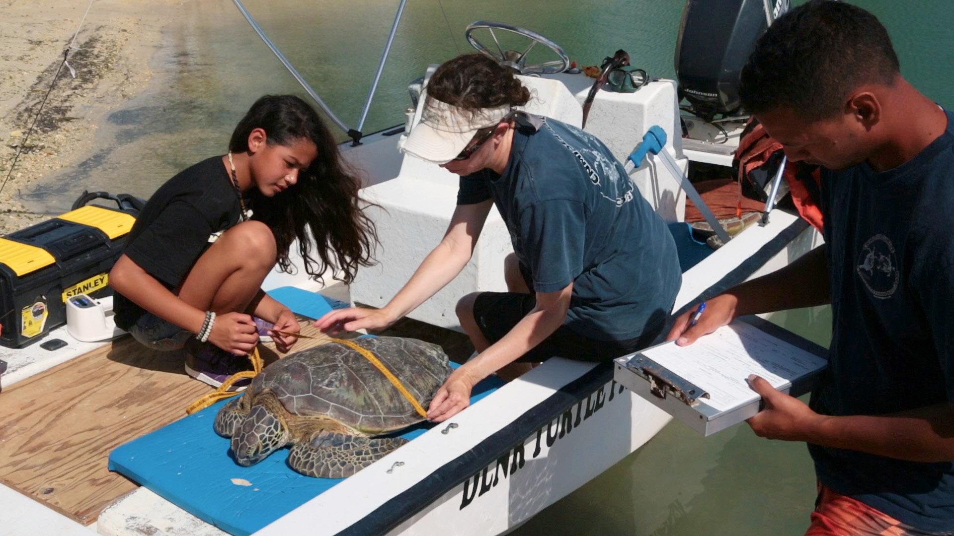 Tammy shows Kaya Rasa how to measure a turtle.