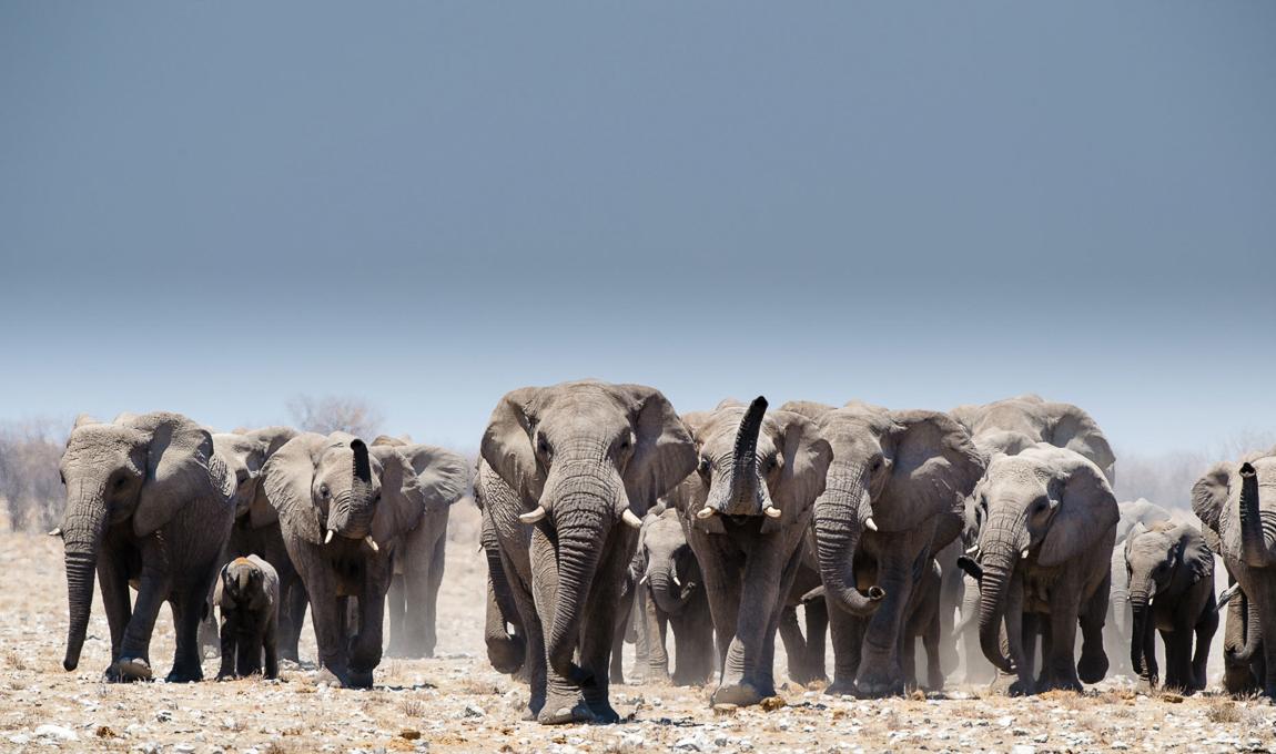 chris_schmid_elephant-3.jpg