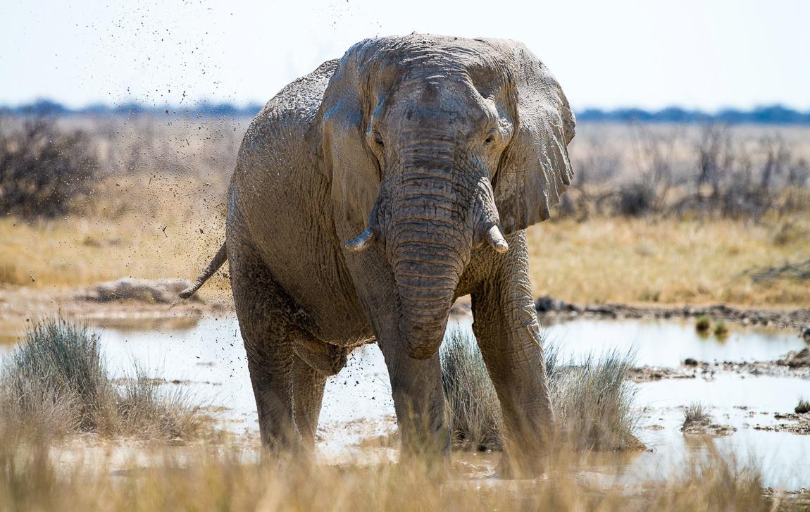 chris_schmid_elephant-2.jpg
