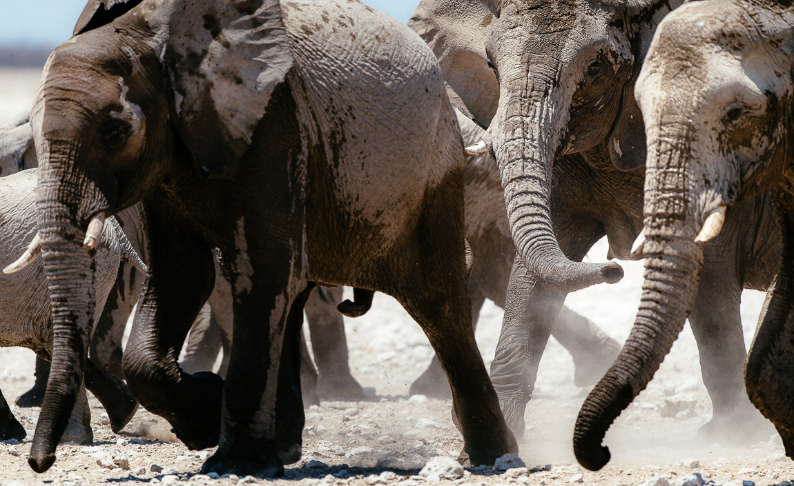 chris_schmid_elephant-4.jpg