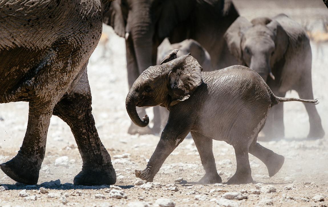 chris_schmid_elephant-5.jpg