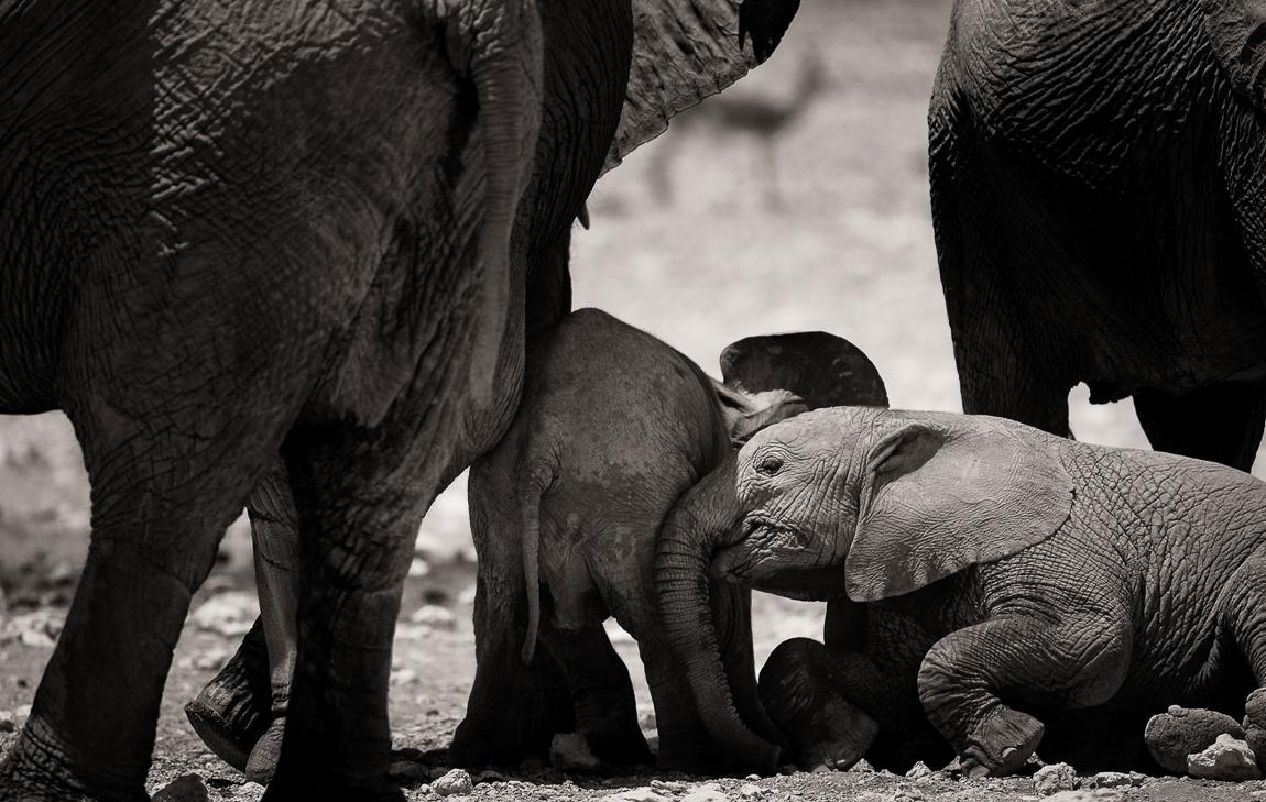 chris_schmid_elephant-9.jpg