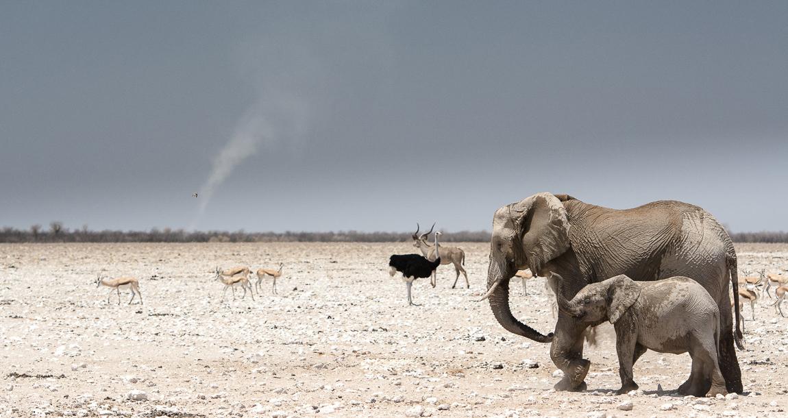 chris_schmid_elephant-10.jpg