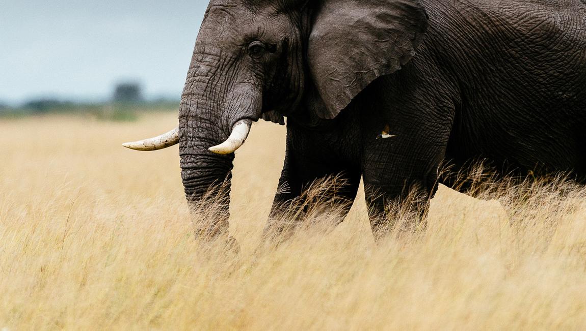 chris_schmid_elephant-13.jpg