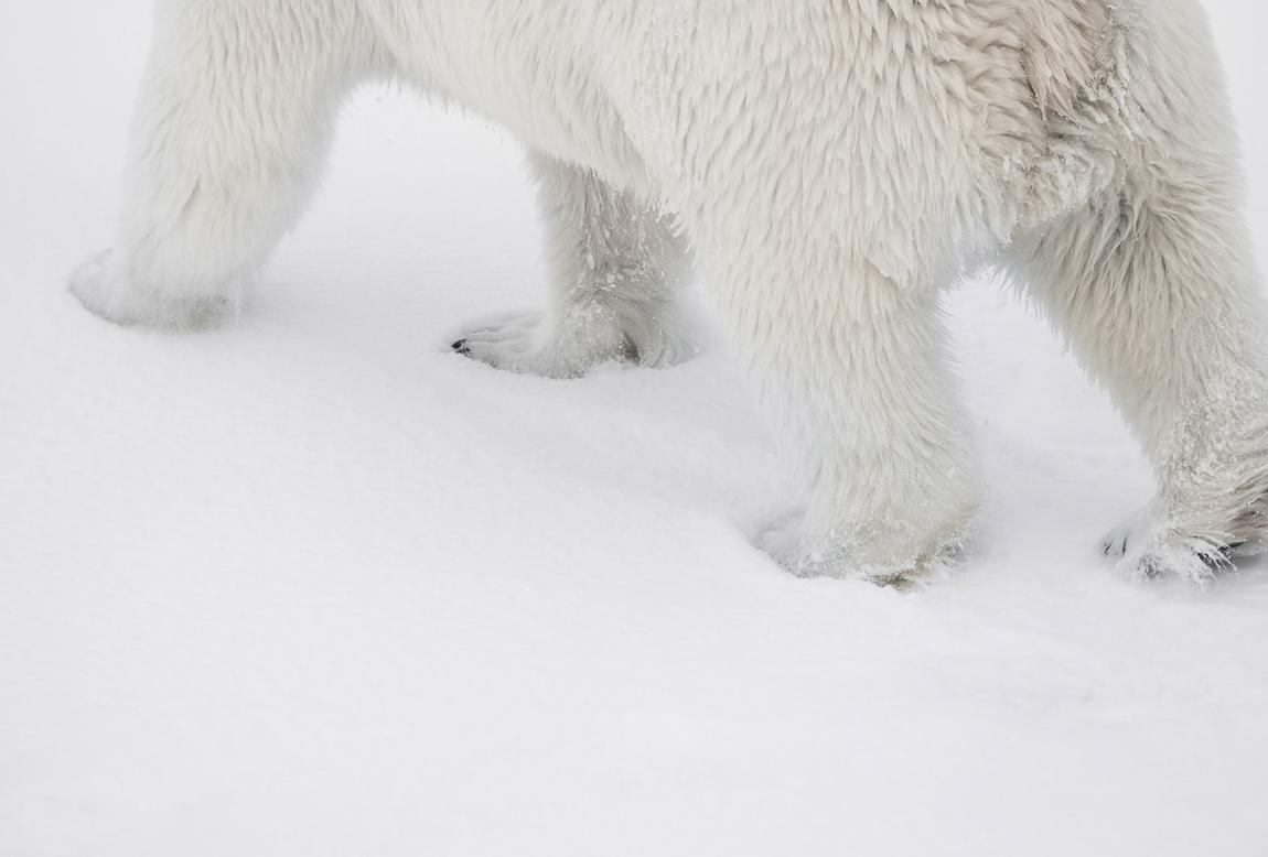 schmid_chris_Svalbard-4.jpg