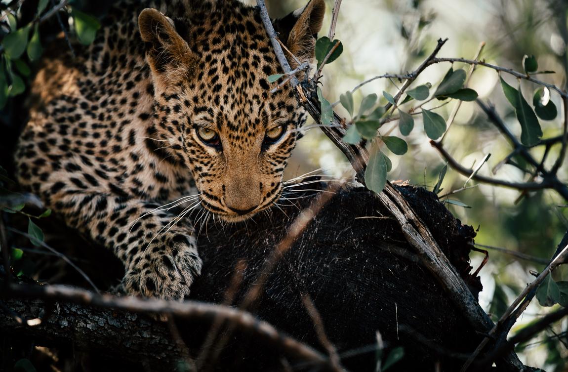namibia-chris_schmid-2.jpg