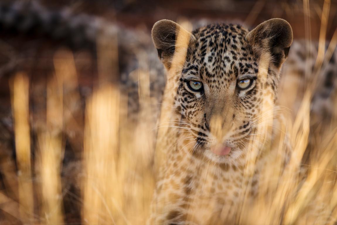 namibia-chris_schmid-3.jpg