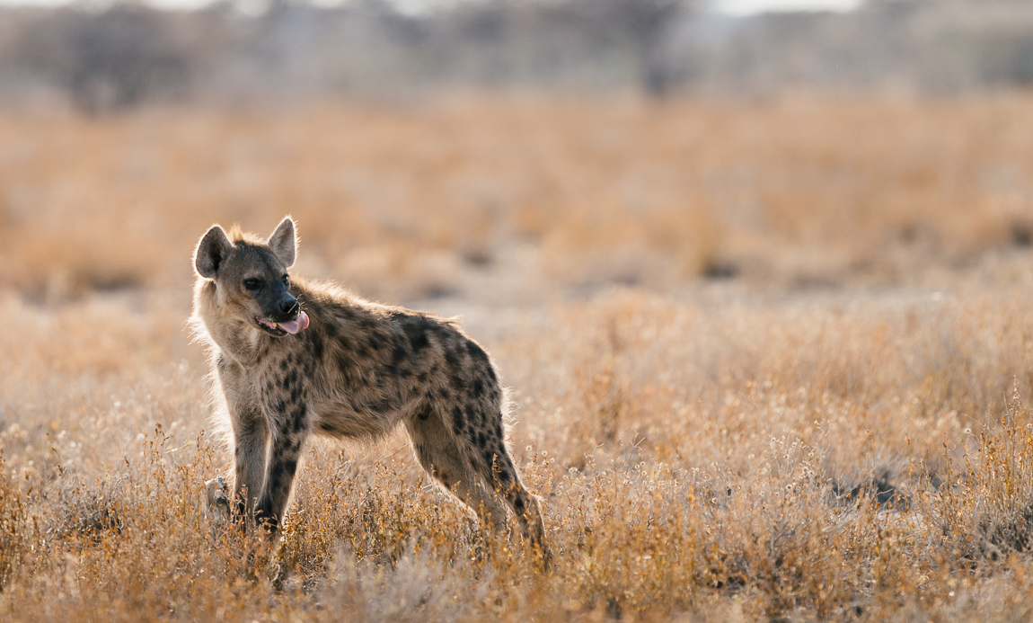 namibia-chris_schmid-9.jpg