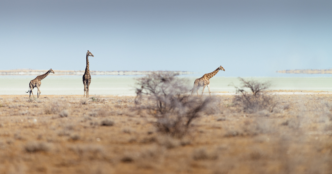 namibia-chris_schmid-12.jpg