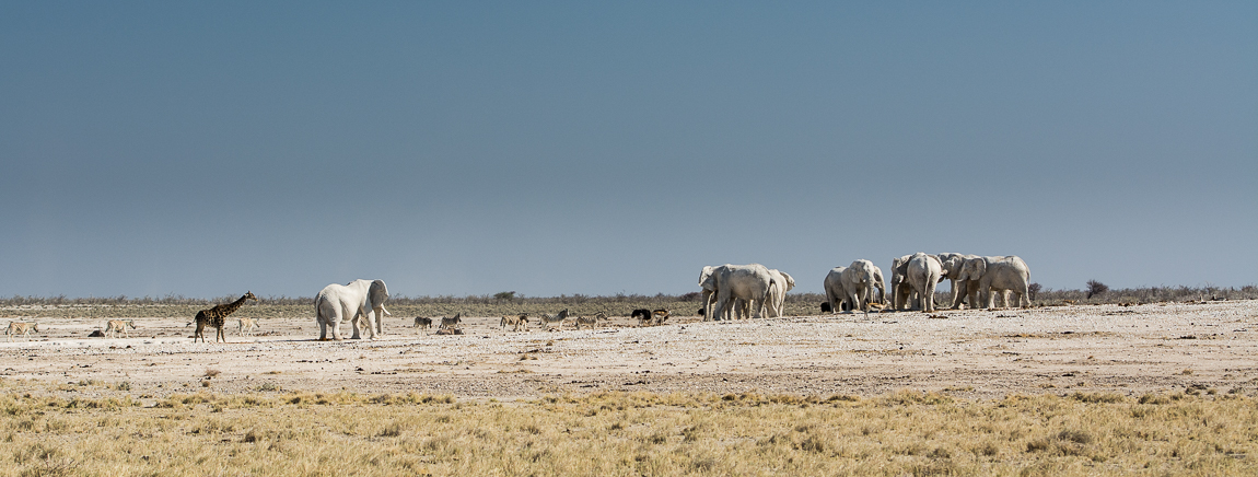 namibia-chris_schmid-16.jpg