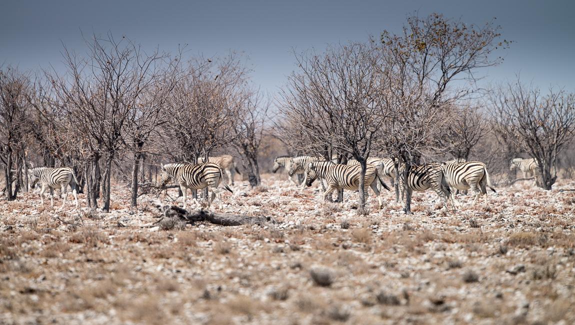 namibia-chris_schmid-20.jpg
