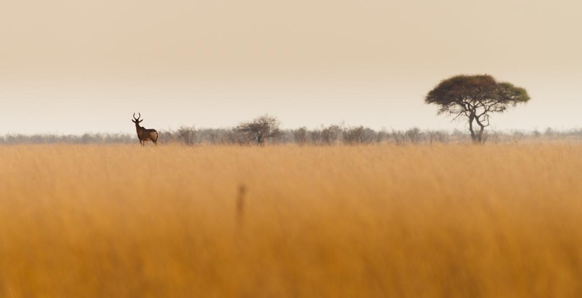 namibia-chris_schmid-32.jpg