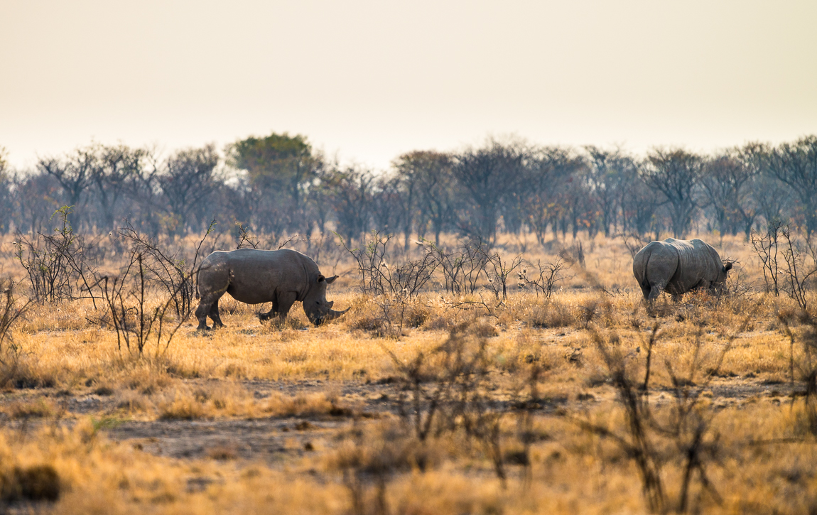 namibia-chris_schmid-31.jpg