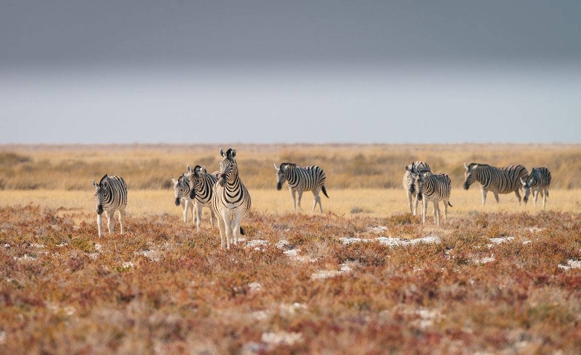 namibia-chris_schmid-33.jpg