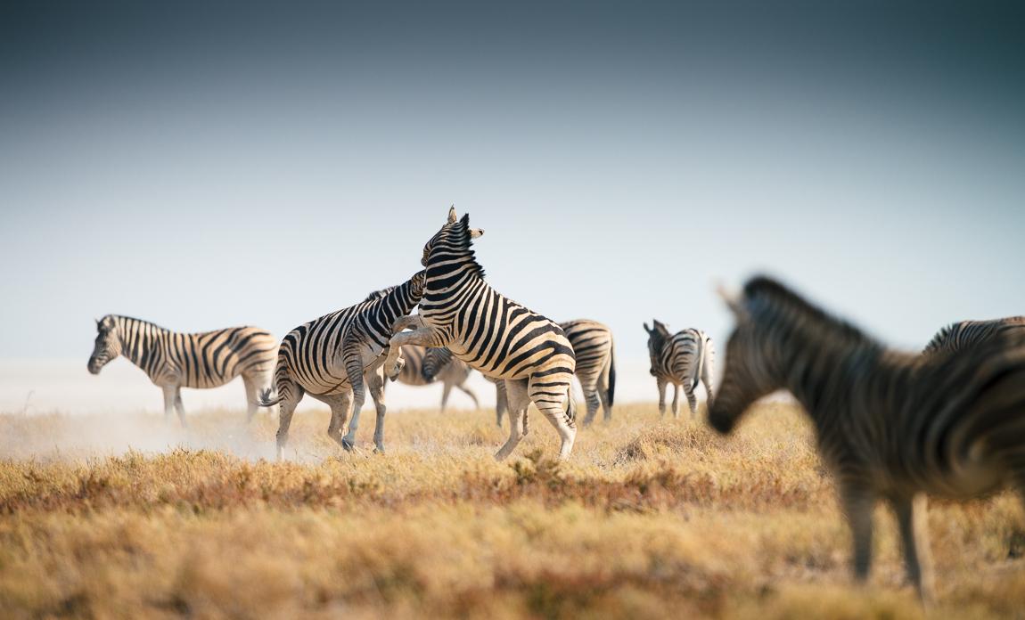 namibia-chris_schmid-34.jpg