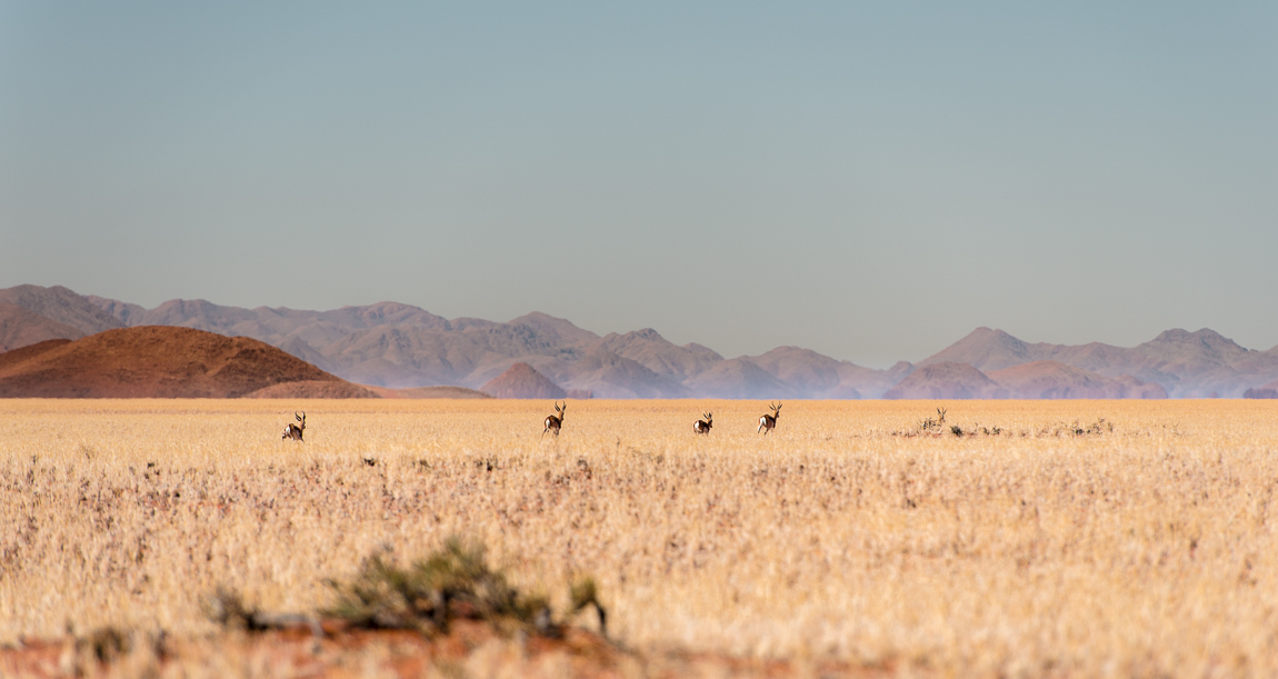 namibia-chris_schmid-83.jpg
