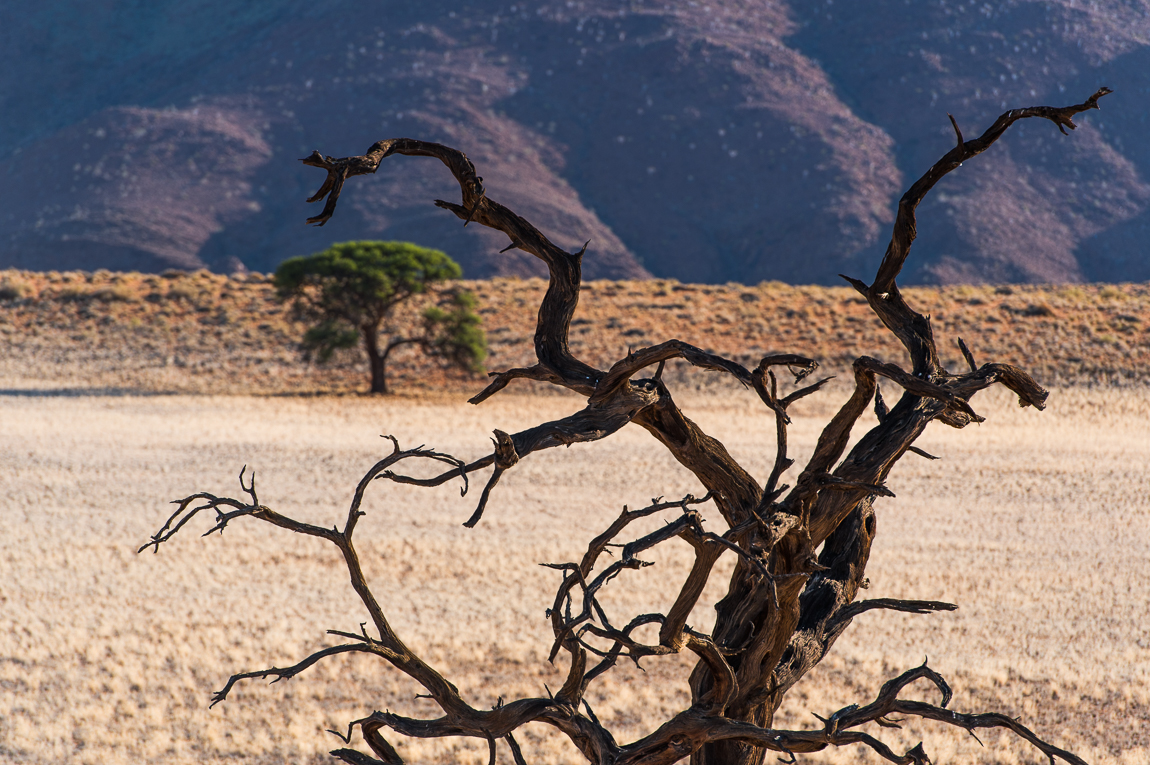 namibia-chris_schmid-84.jpg