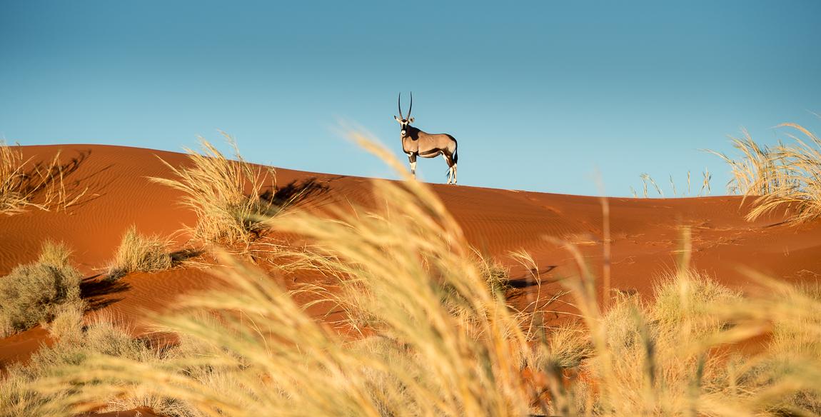 namibia-chris_schmid-90.jpg