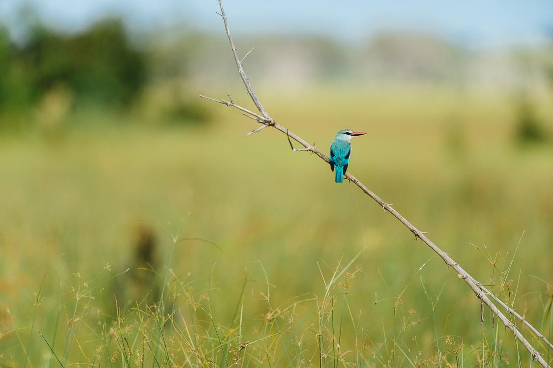 botswana-10.jpg