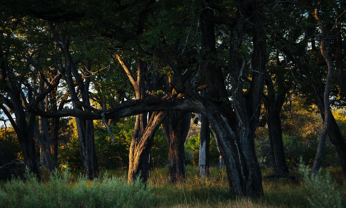 botswana-20.jpg