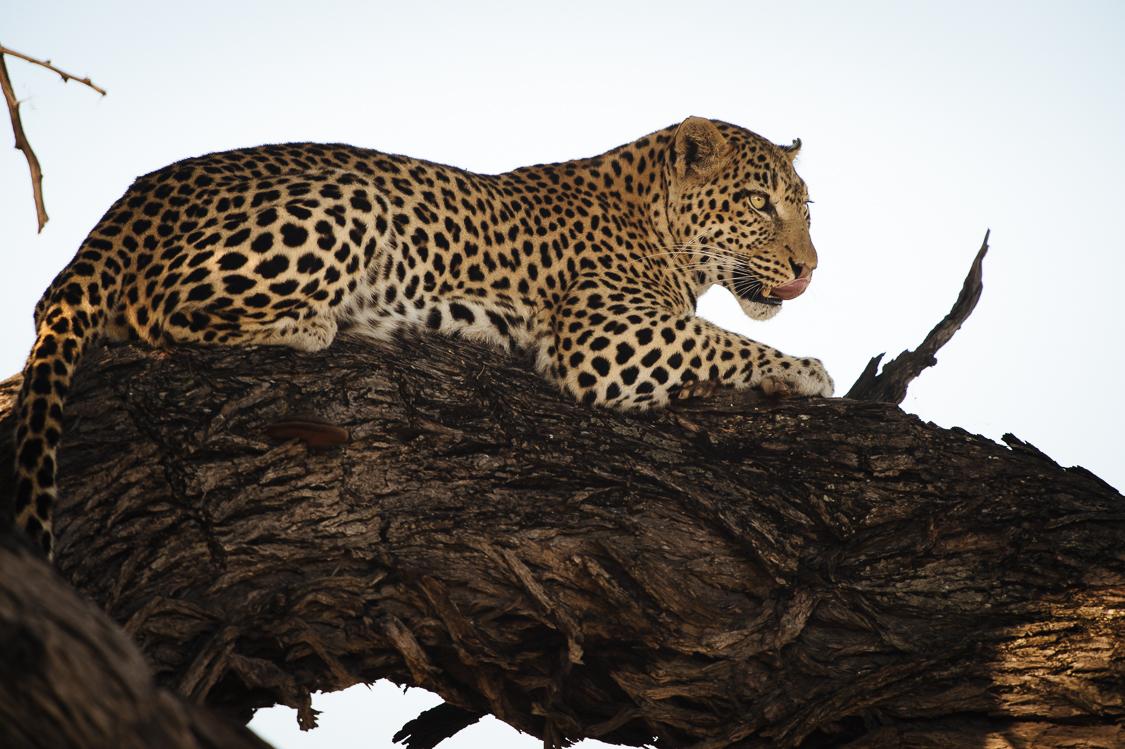 botswana-26.jpg