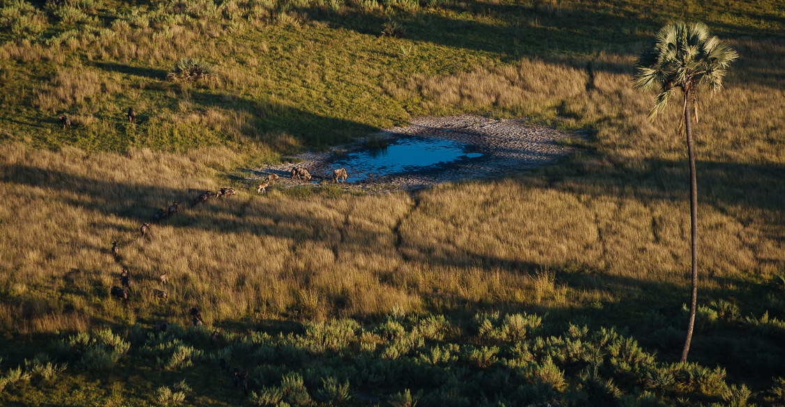 botswana-33.jpg