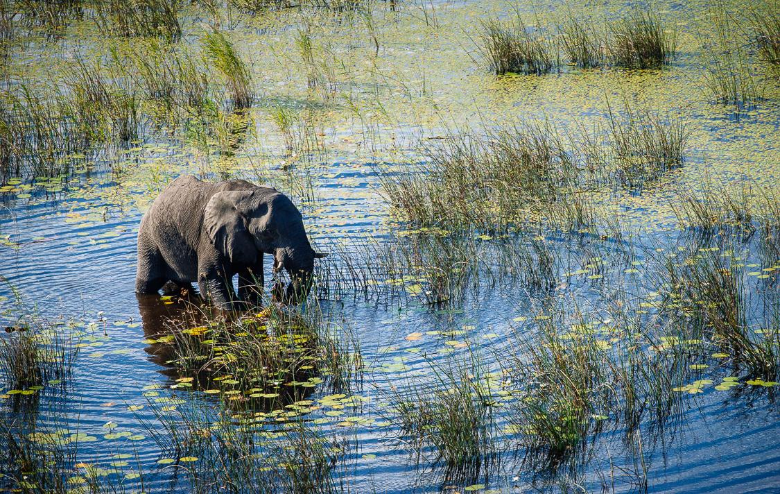 botswana-49.jpg