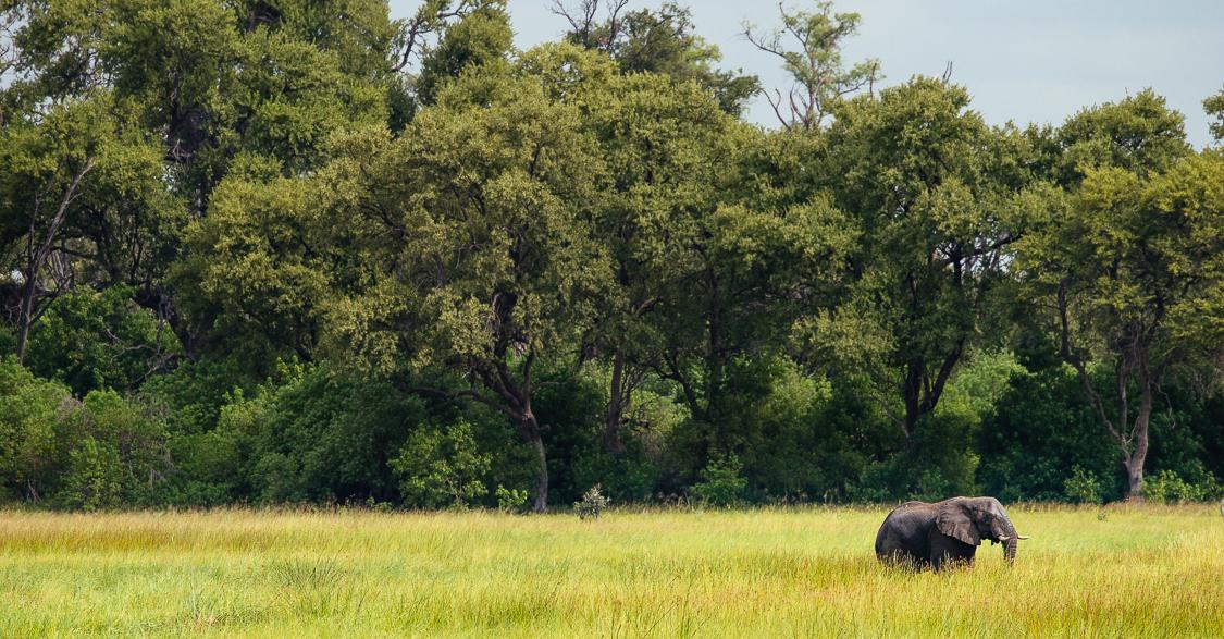 botswana-75.jpg