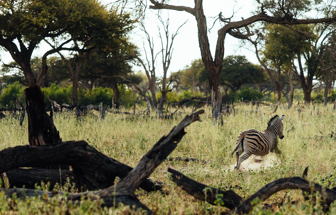 botswana-78.jpg