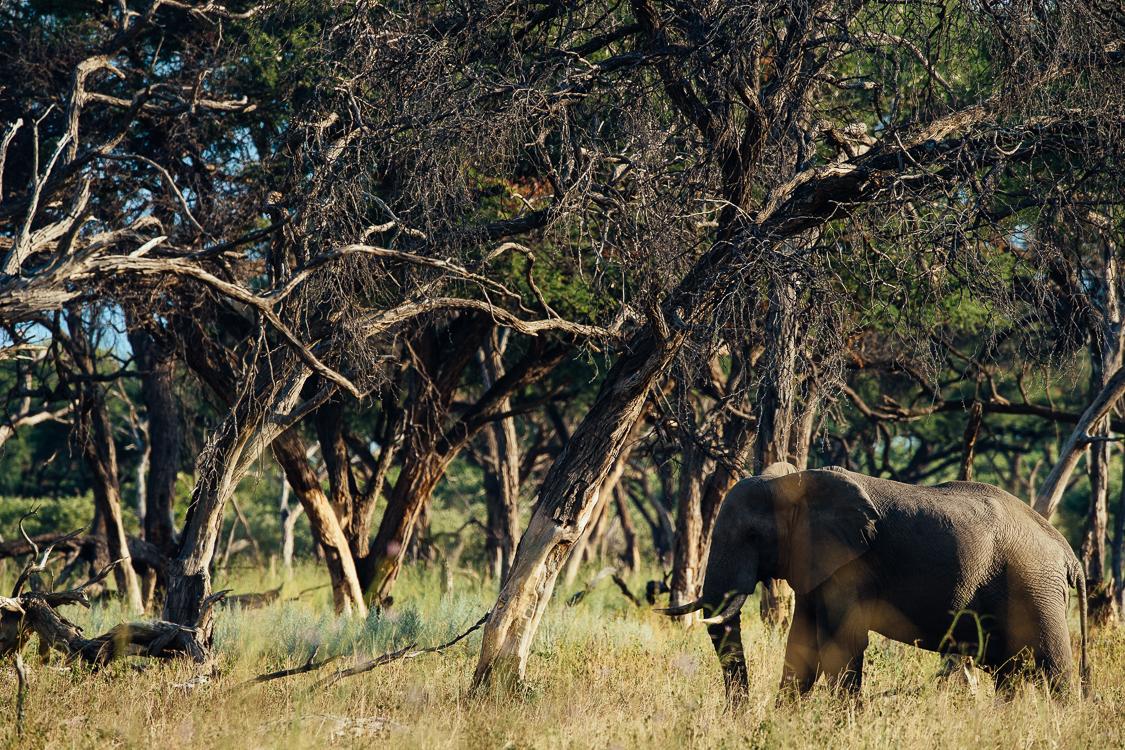 botswana-79.jpg