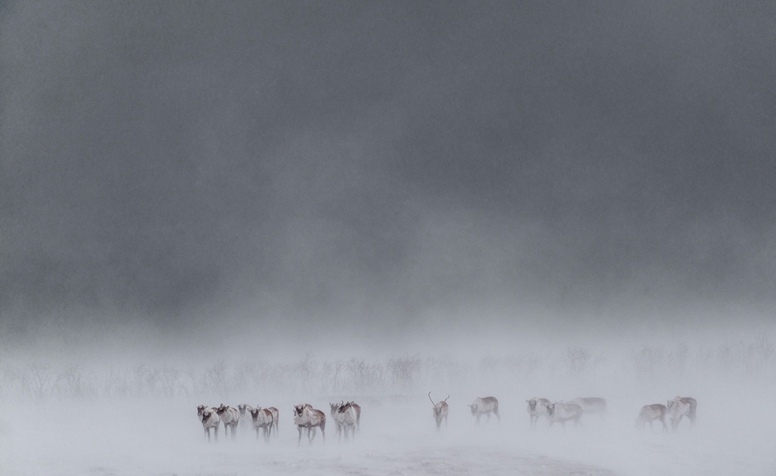 iceland_chris-schmid-40.jpg