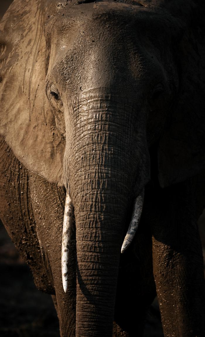 chris_schmid_wildlife-5.jpg