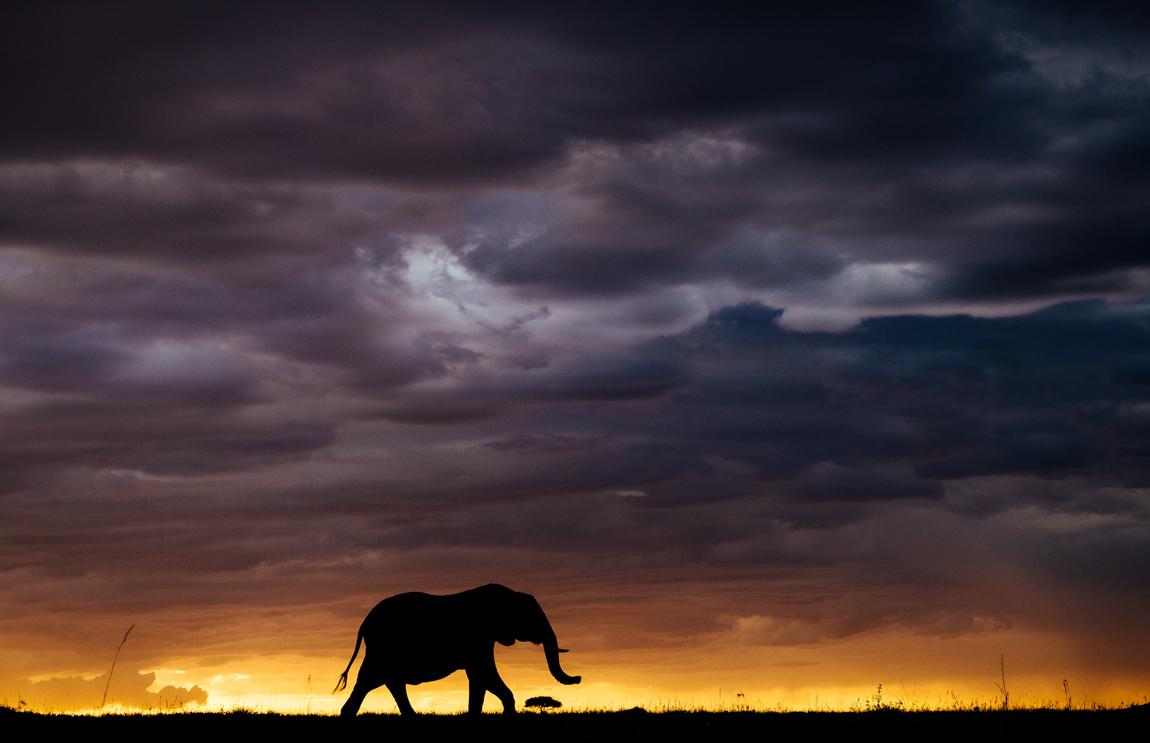 chris_schmid_wildlife-8.jpg