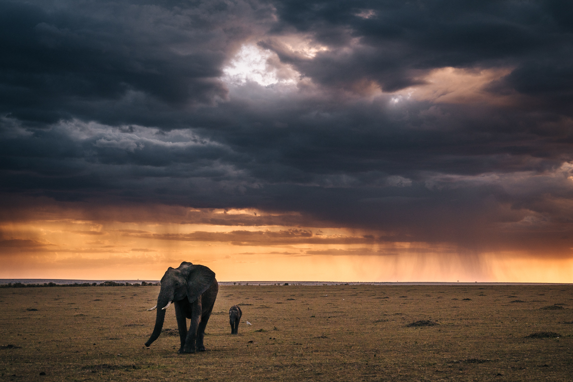 chris_schmid_wildlife-24.jpg