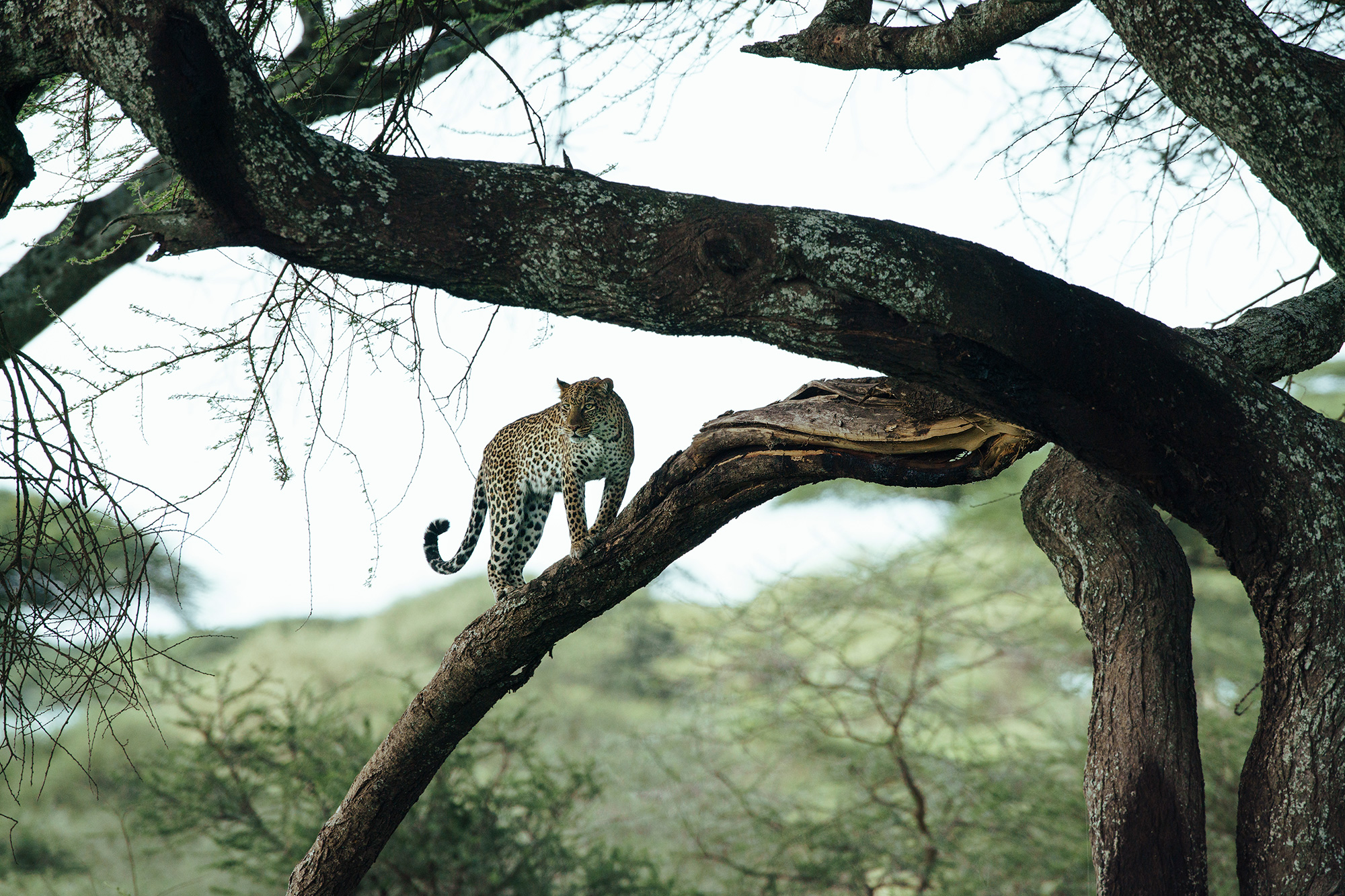 CS-250517-serengeti_ndutu-240_original.jpg