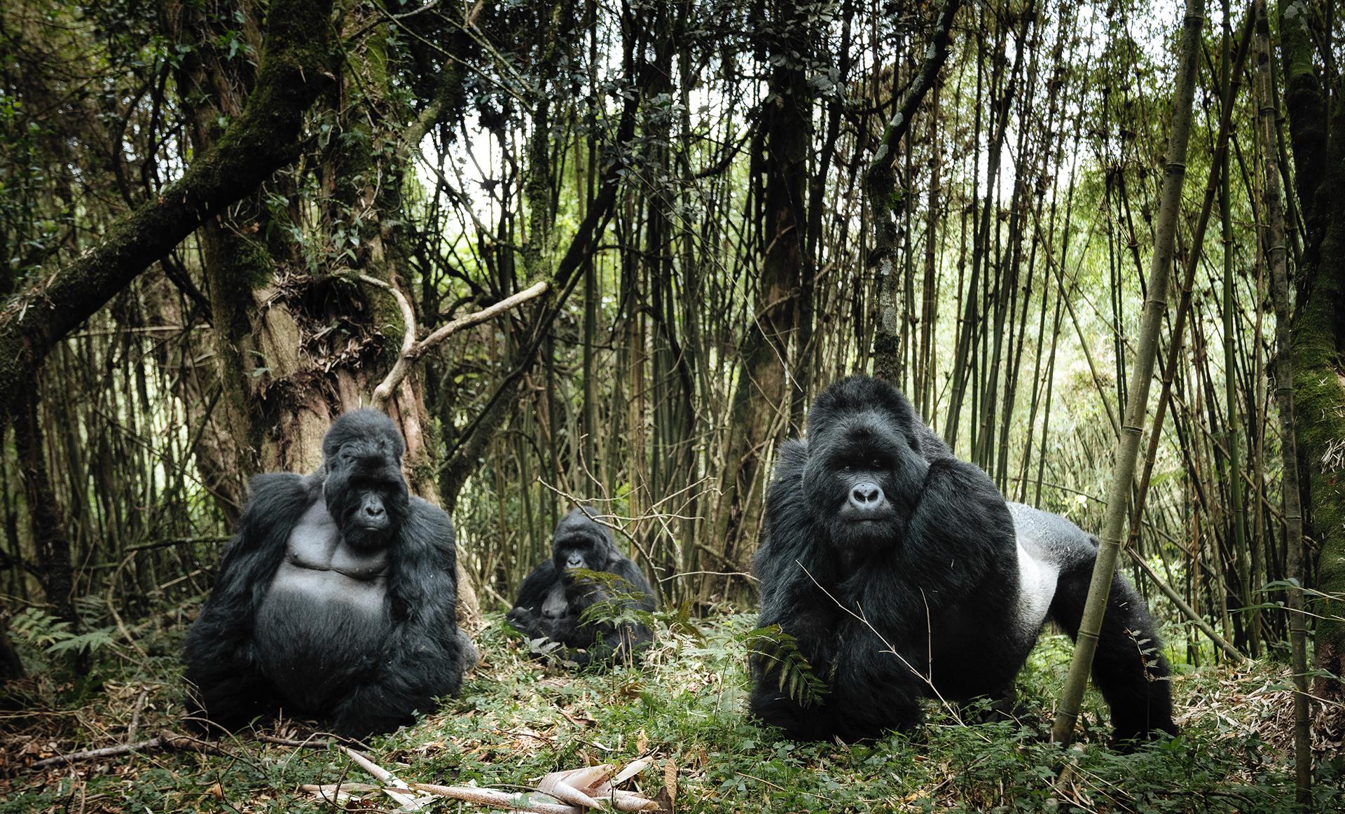 Schmid_C_Terrestrial_Wildlife_Family_Portrait.jpg