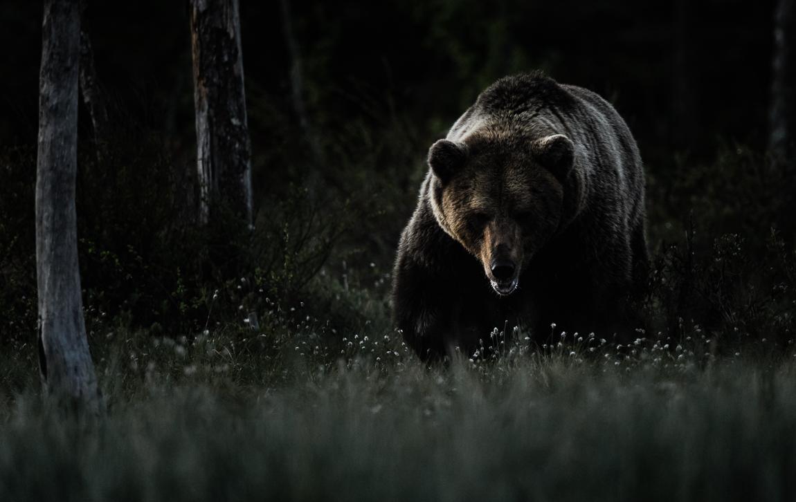 CS-010614-bear-001.jpg