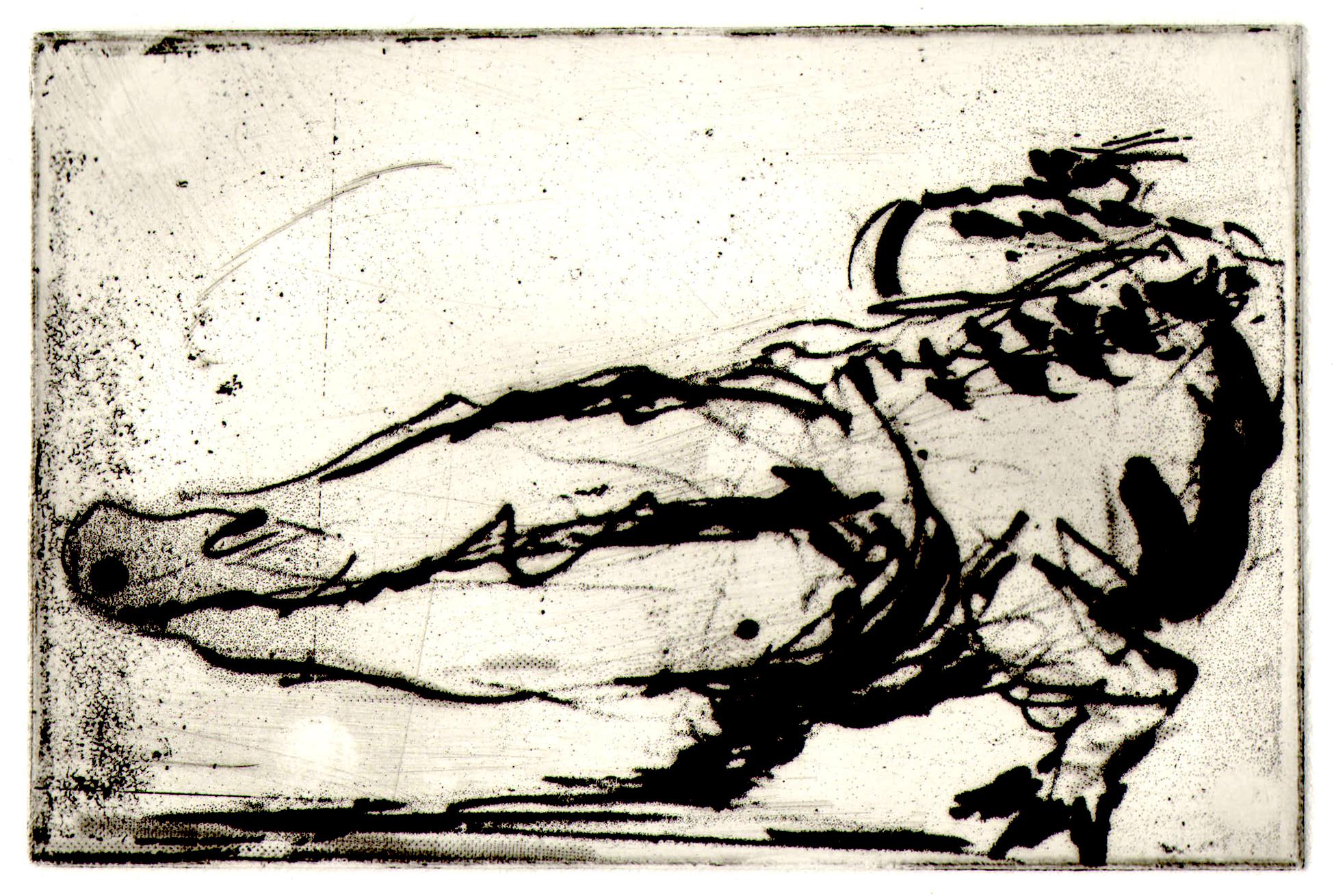 etch croc.jpg