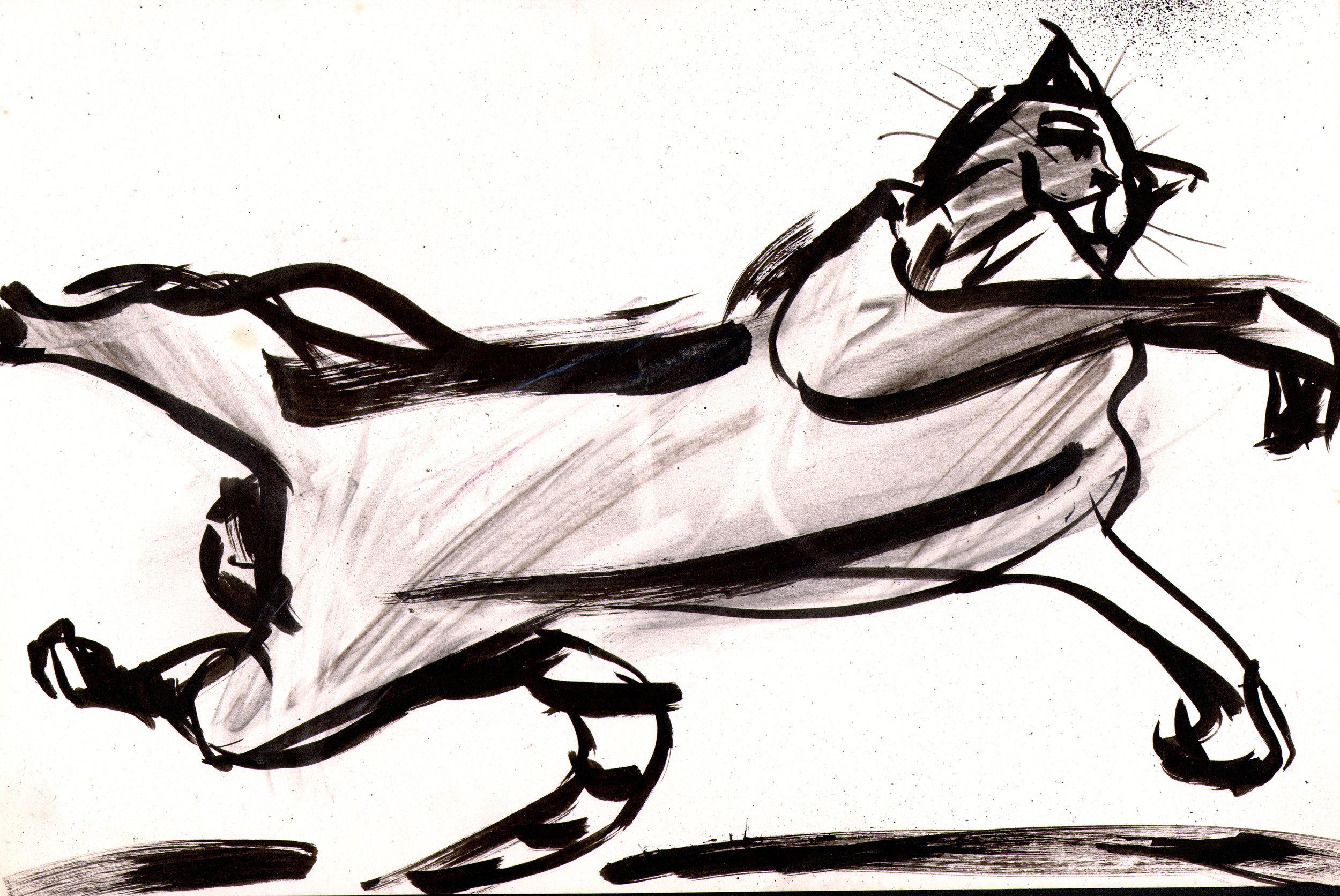 catleap.jpg