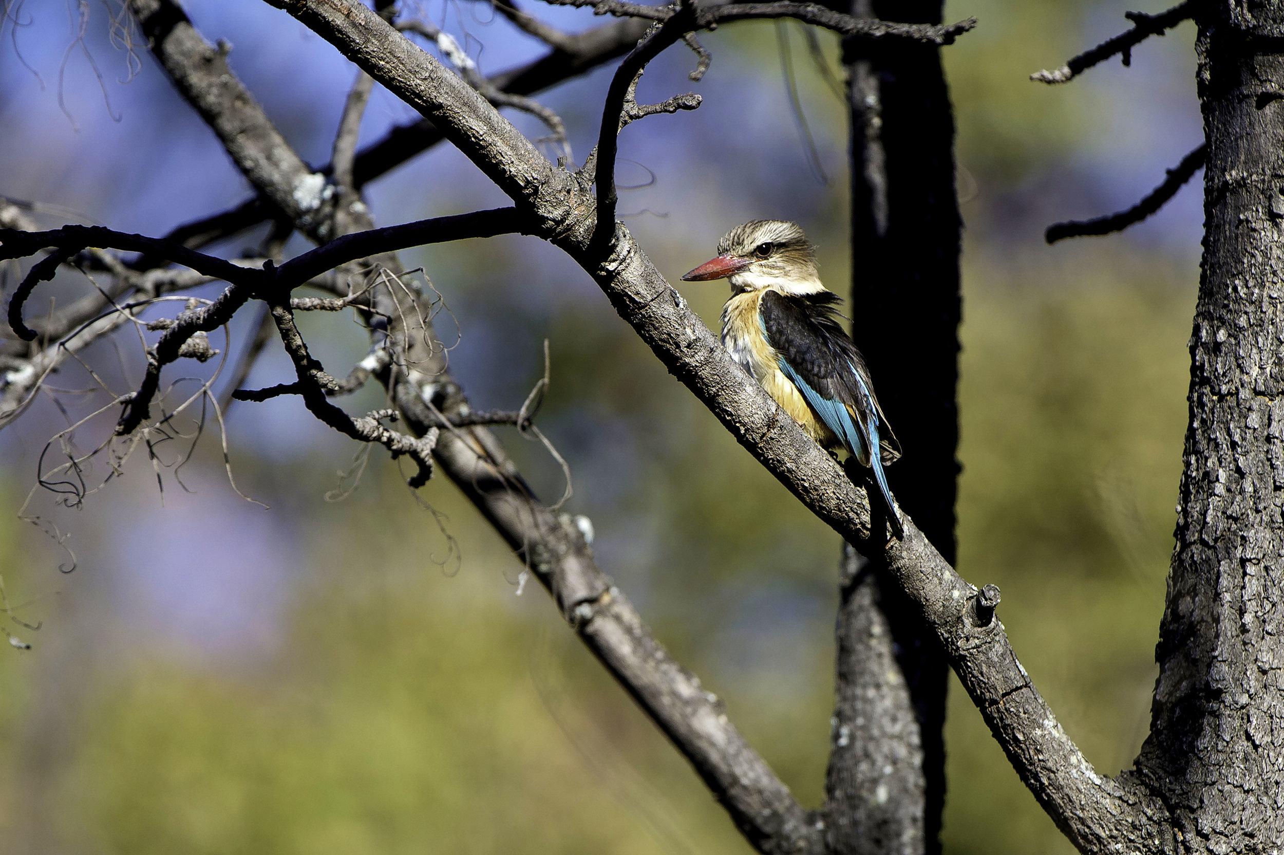 Rare Earth_Welgevonden_Bird_06.jpg
