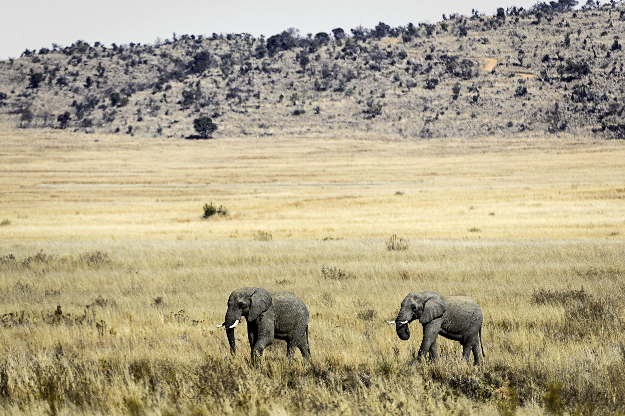 Rare Earth_Welgevonden_Elephant_07.jpg