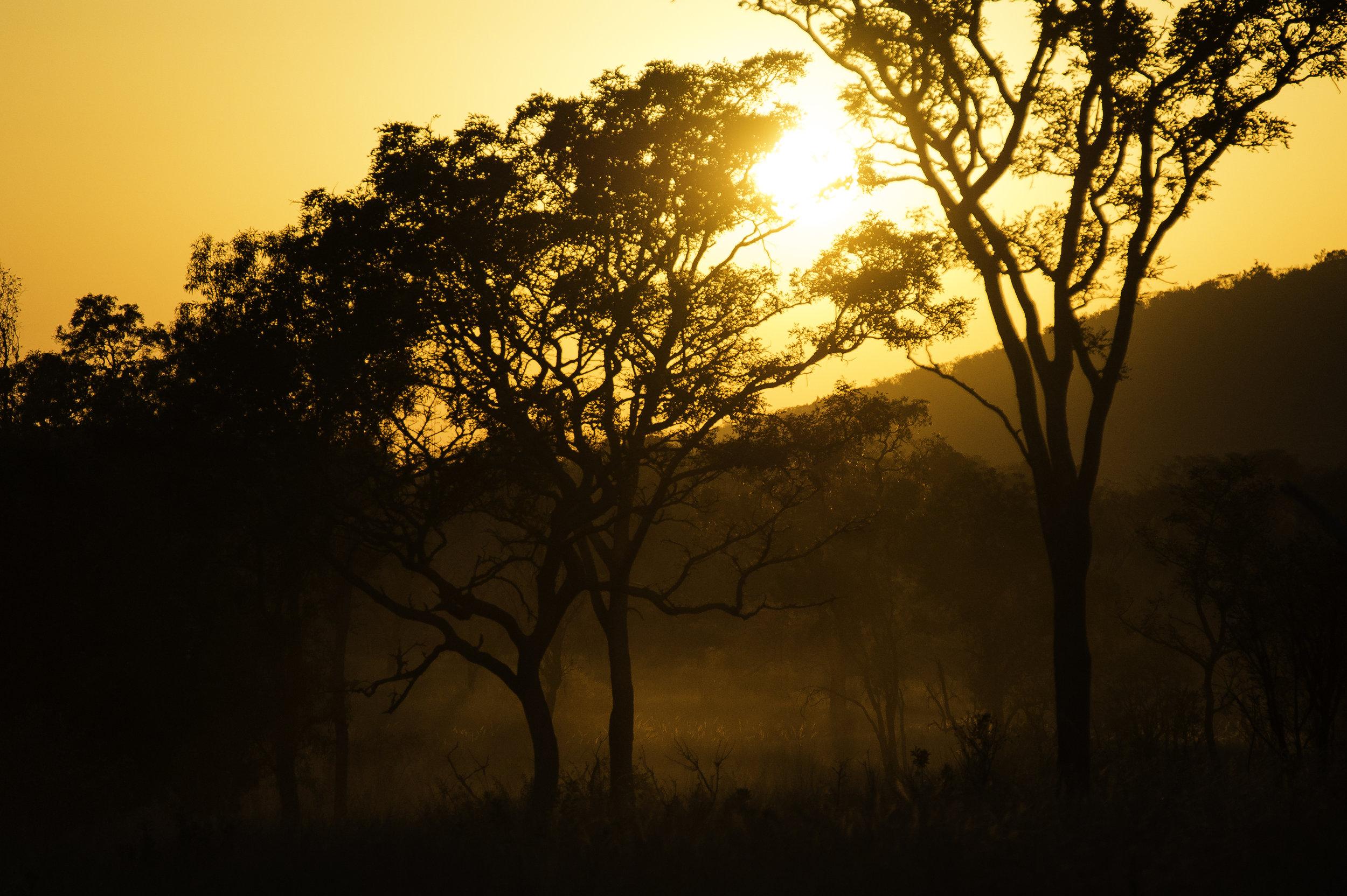Rare Earth_Welgevonden_Sunset.jpg